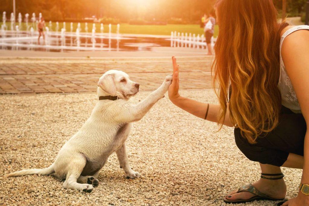 trabajo en Londres como cuidador de mascotas